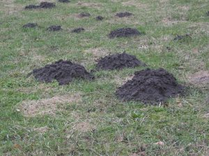 Last van molshopen in de tuin?